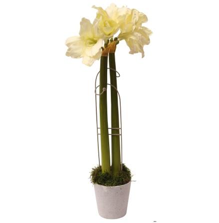 Blomstöd Amaryllis ELDgarden