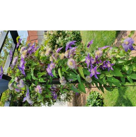 Växtstöd Spaljé stolpe halvmåne rost ELDgarden