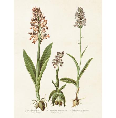 Poster vintage orchidéer, 18x24 cm Sköna Ting