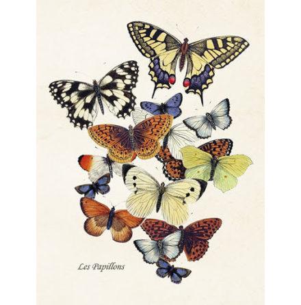 Poster vintage fjärilar 18x24 cm Sköna Ting